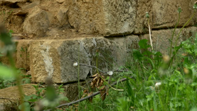 Stone Blocks Wall Ruins in Forest video