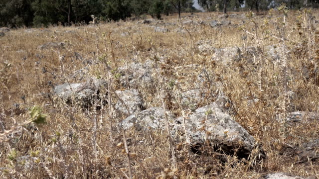 Stones in Field Remains of Roman Road in Israel video