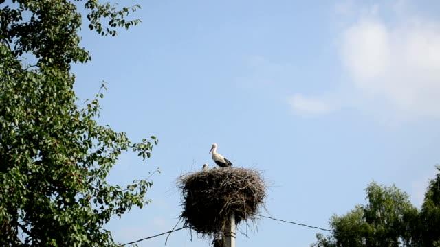 stork family video