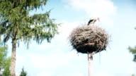 Stork in the nest video