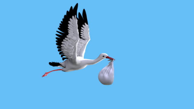 Stork video