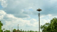Storks are Sitting in a Nest on a Pillar. Time Lapse video