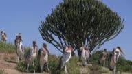 Storks - Marabu_Gruppe3 video