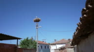 storks nest on top of an electric pole video