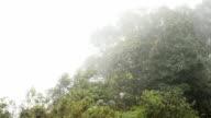 storm fog at Phu Tubberk inthailand video