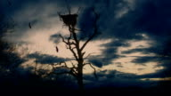Storm over the dried tree video