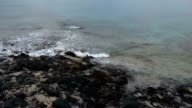 storm waves on the rocky shore video