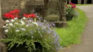 St.Peter's Flowers Pull Focus video