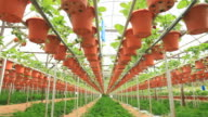 strawberry farm video