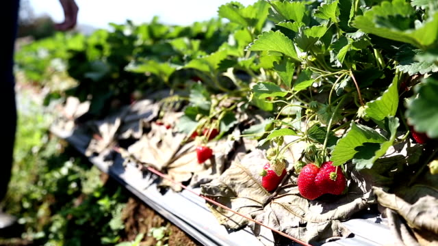 Strawberry Field video