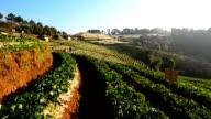 Strawberry Field video