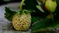 strawberry video