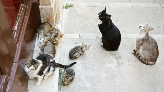 Stray cats waiting for food video
