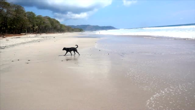 SLO MO Stray dog on the beach video