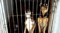 Stray dogs in the shelter in Ukraine video