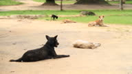 Stray dogs video