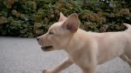 SLO MO Stray Puppy Running Along The Road video