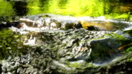 stream, brook, flow, torrent, outpouring, video