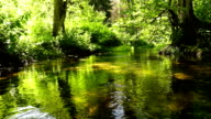 stream, brook, flow, torrent, river video
