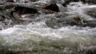 stream clear mountain river video