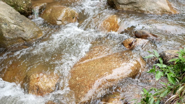Stream flowing in forest video