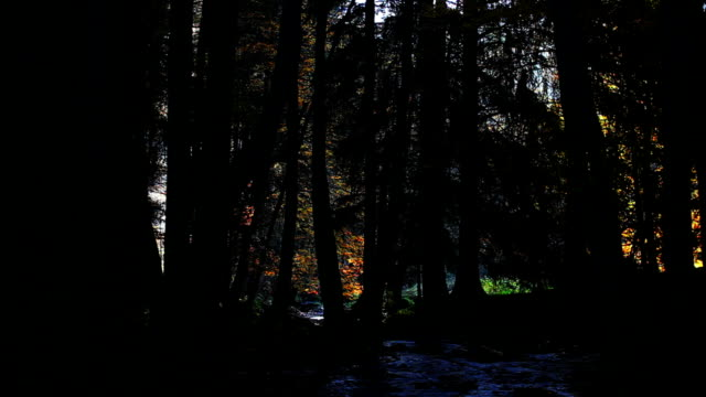 Stream Flowing In Idyllic Autumn Forest video