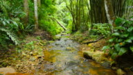 Stream - Flowing Water in the forest video