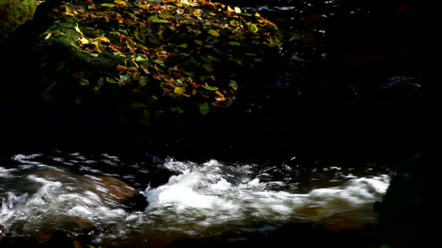 HD Stream in Autumn Forest (Loopable) video