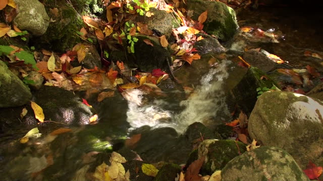 Ruisseau en automne video