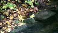 Stream in Fall (HD, PAL, NTSC) video