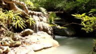 Stream in forest video
