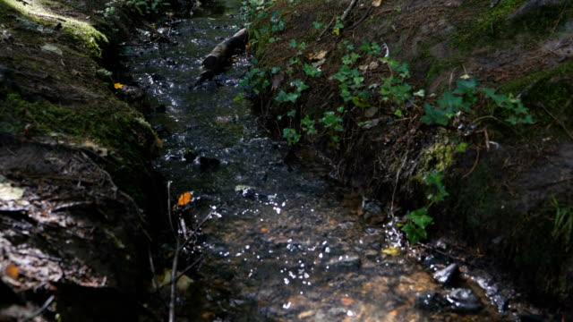 stream in forest,Norhtern Ireland video