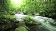 Water spring in forest. video