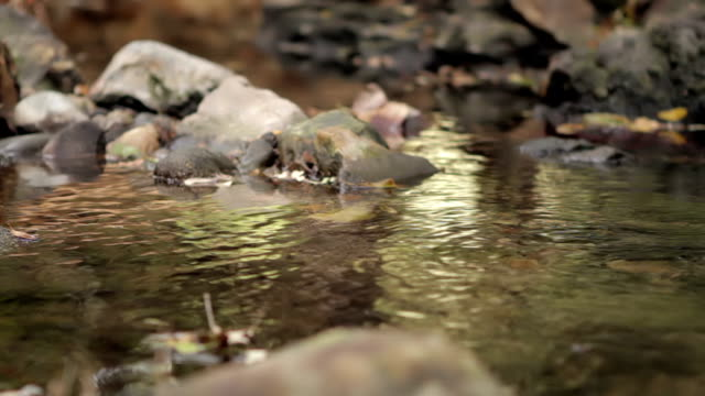 Stream in the Fall video