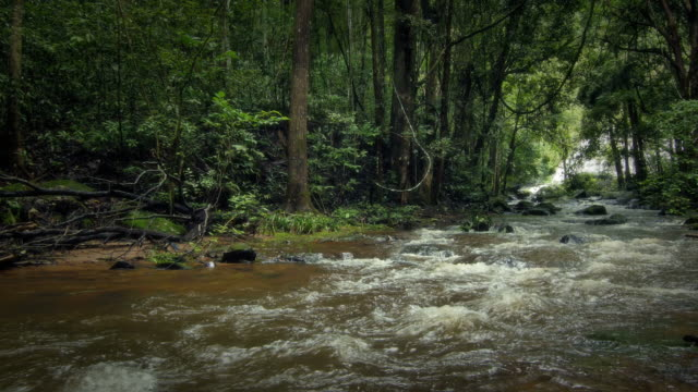 Stream in the rainforest video
