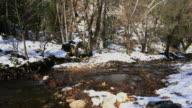 Stream Mist Frozen Winter Wilderness Forest video