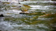 Stream of mountain river close-up video