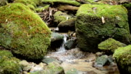 Stream ran down among the mossy rocks. video