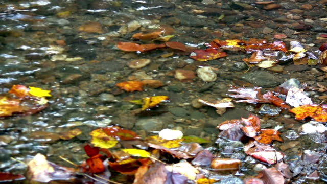 Stream with Autumn leaves. video