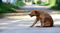 street dog video