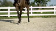CLOSE UP: Strong muscular dark bay gelding trotting sideways in sandy paddock video