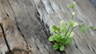 strong seedling growing in trunk tree video