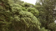Strong wind bends the branches of trees and grass video