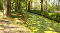 CLOSE UP: stunning thick layer of green algae growing on surface of creek video