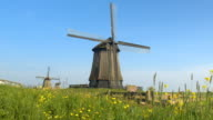 CLOSE UP: Stunning wooden windmill heritage next to blooming meadow field video
