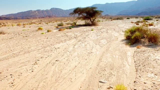 Stunted trees at the middle of desert surrounded with rocks video