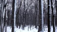 Stylish Nature Scenes video