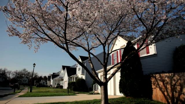 Suburban Neighborhood video