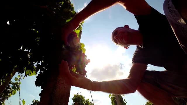 Successful Winegrower Showing Thumbs Up video