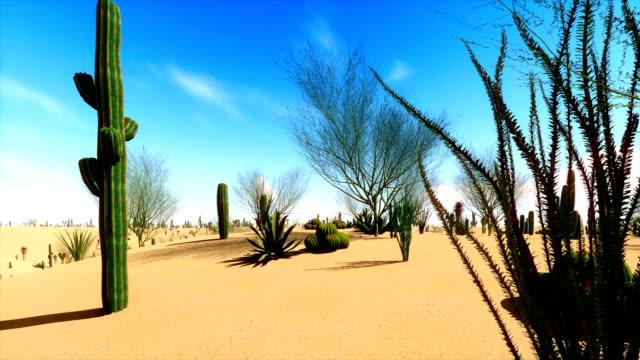 Succulent vegetation on the desert video